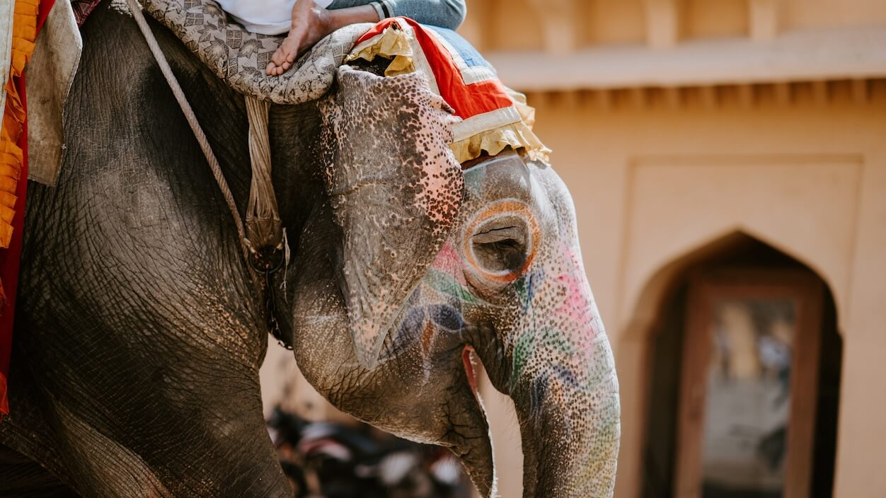 The NGO Wildlife SOS Opens India's First Elephant Hospital