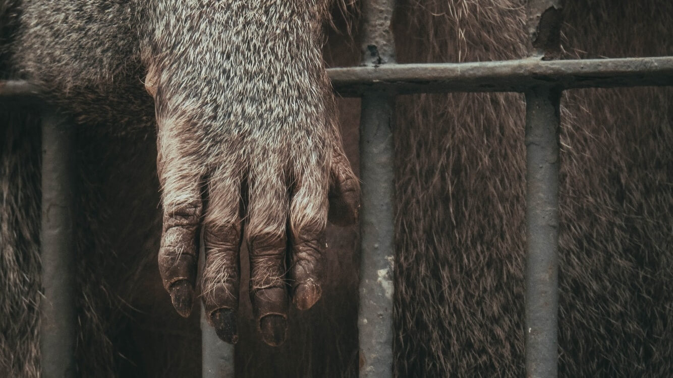 Congressional Members Urge FDA to End All Primate Testing