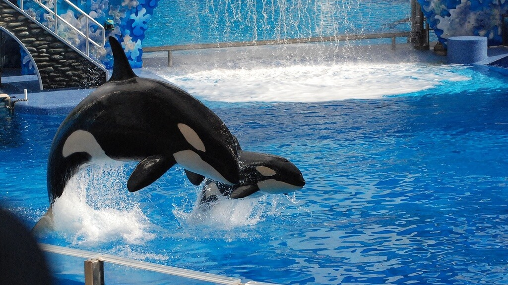 SeaWorld Urged to Disclose Truth Behind 'Blackfish' Orca Deaths
