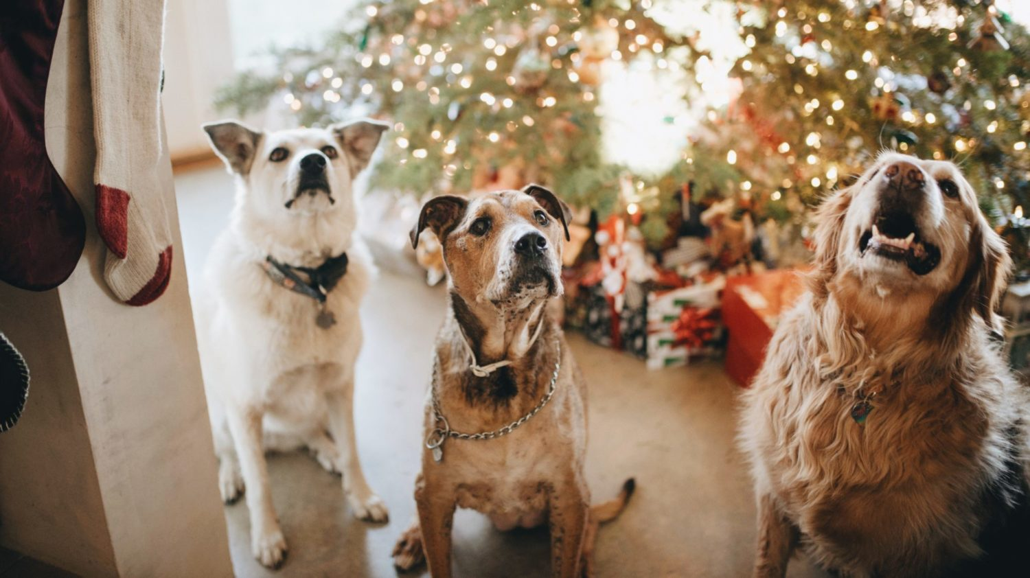 7 Vegan and Cruelty-Free Christmas Gifts for Pets