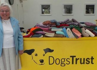 89-Year-Old Dog Lover In Basildon Knitted 450 Coats for Shelter Pups