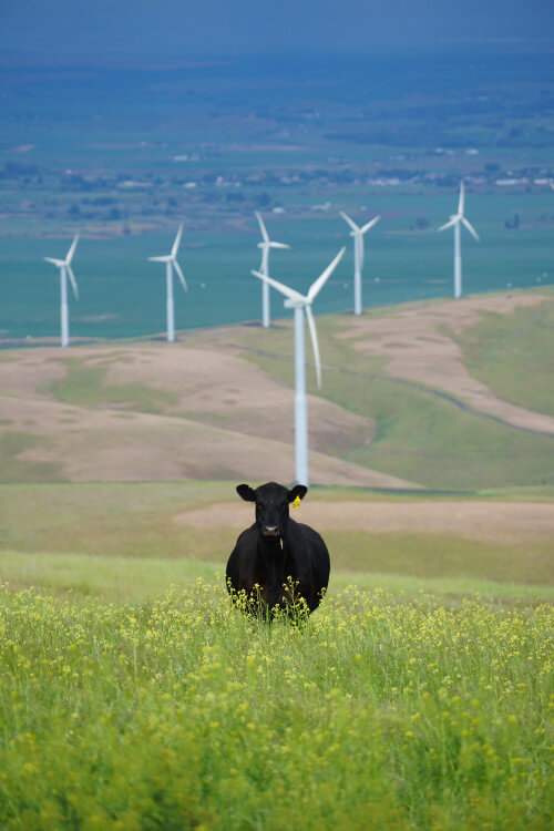 Meat and Dairy Industries Create More Than 60% of Agricultural Greenhouse Gases, New Study Finds