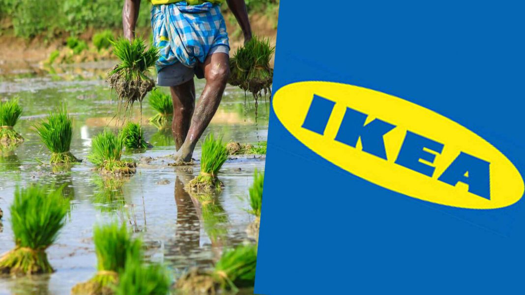IKEA's 'Better Air Now' Initiative Reduces Air Pollution in India