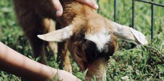 Ireland Allocates Nearly €3M to Fund 108 Animal Welfare Organizations