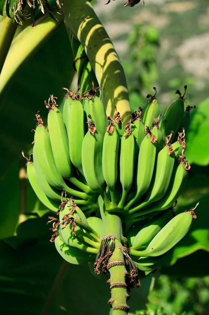 Banana Trees Are Being Used to Make Ethical Vegan Alternatives to Silk