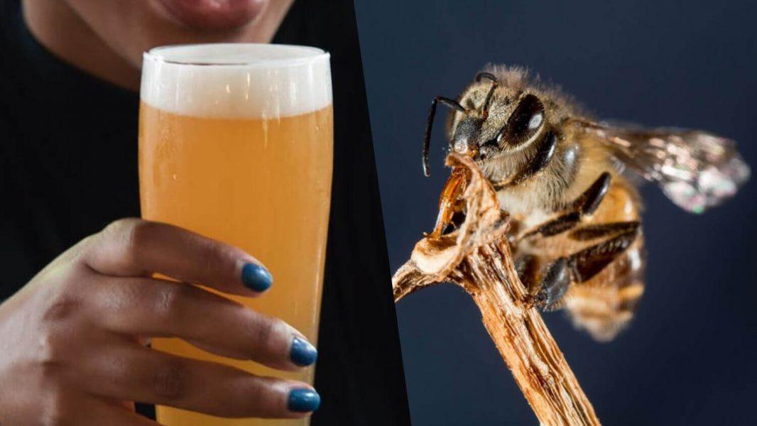 Vegan Bee-Saving Bumble Beer Set to Expand Across UK