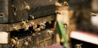 Finnish Scientists Create World's First Vaccine to Save Threatened Honeybees