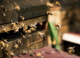 Finnish Scientists Create World's First Vaccine to Save Threatened Honeybees