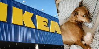Italian IKEA Location Lets Stray Dogs Live Inside
