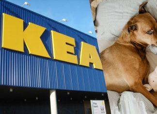Italian IKEA Location Lets Stray Dogs Live Inside