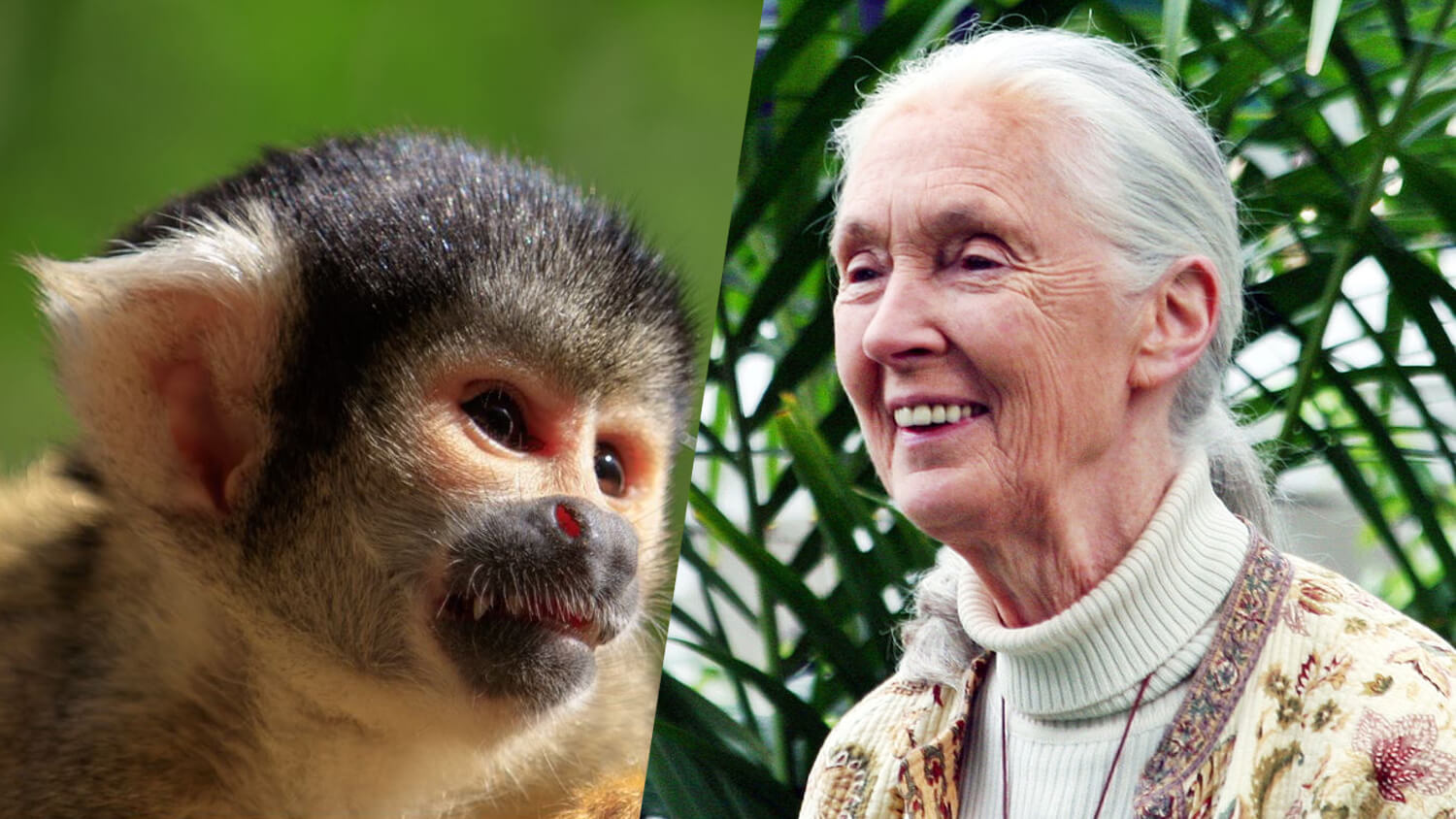 Primatologist Jane Goodall Facilitated the FDA's First Release of Primates From Animal Testing Labs
