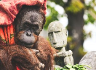 Norway Is First Nation to Ban All Palm Oil Based Biofuel to Prevent Rainforest Destruction