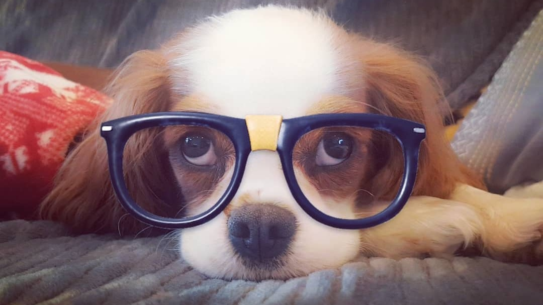 Snapchat Filters Now Work on Your Dogs