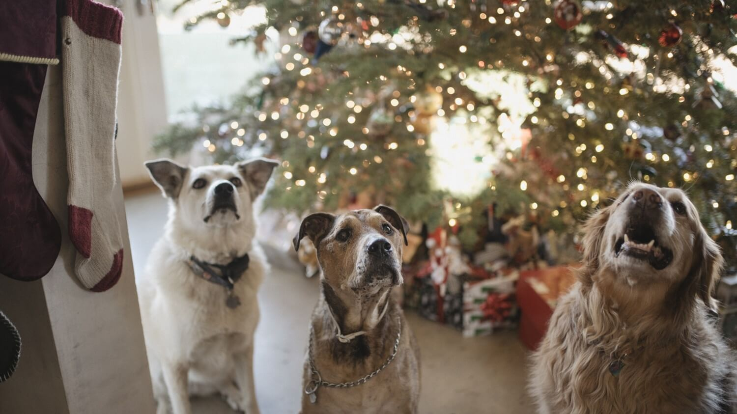 7 Vegan and Cruelty-Free Christmas Pet-Presents for Cats and Dogs