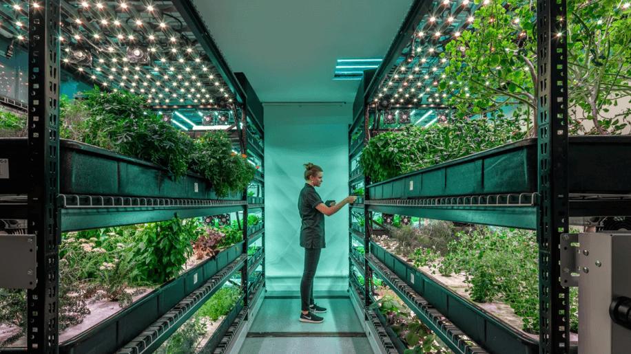 Bowery Vertical Farming Raises $90 Million to Bring Vegetables to New York Vegan-Friendly Restaurant Sweetgreen