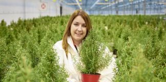 Edible Vegan Christmas Trees Launch at Waitrose