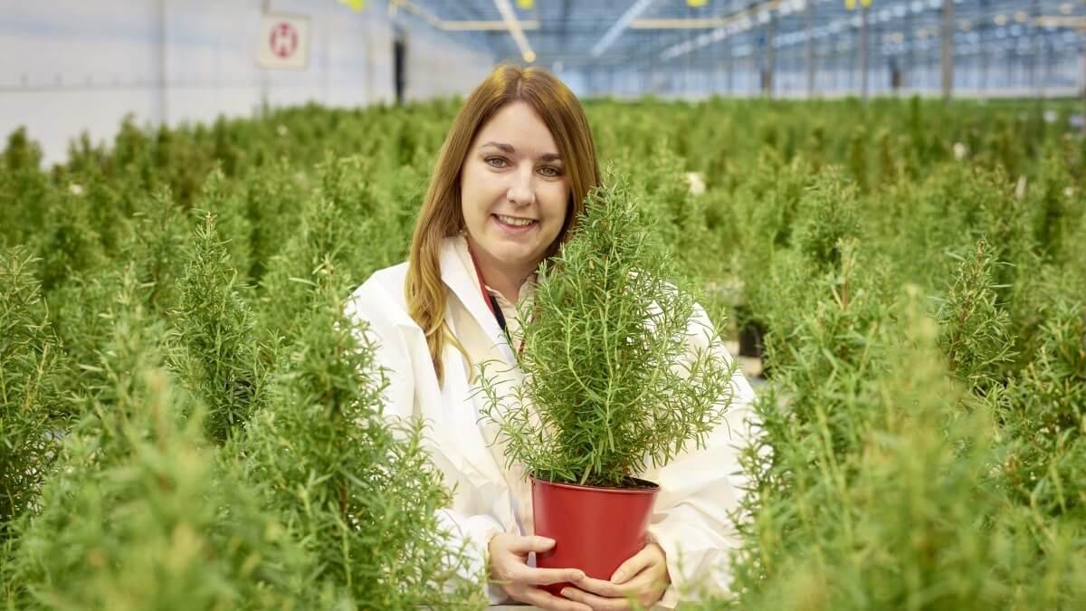 Edible Vegan Rosemary Christmas Trees Launch at Waitrose