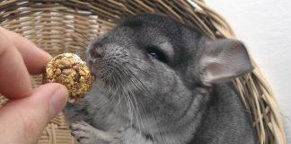 Serbia Bans Fur Farms, Saving 12,000 Chinchillas a Year