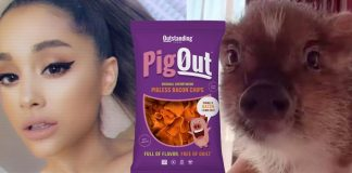 Ariana Grande Had a Party With Her Pig, Piggy Smallz, and Vegan Pig Out Bacon Chips
