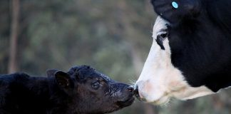 New Jersey Could Lead Nation in Pregnant Animal Slaughter Ban