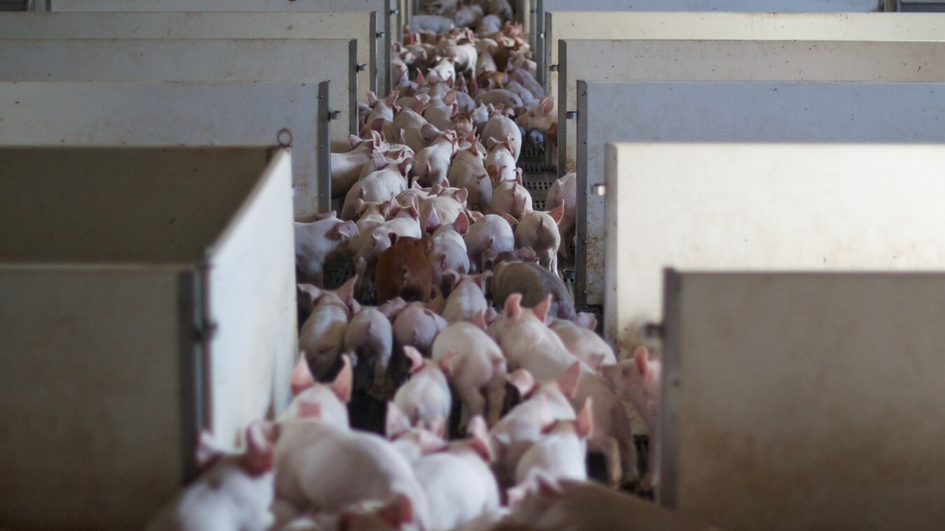 Map of 5,000 Factory Farms Hopes to Turn More People Vegan
