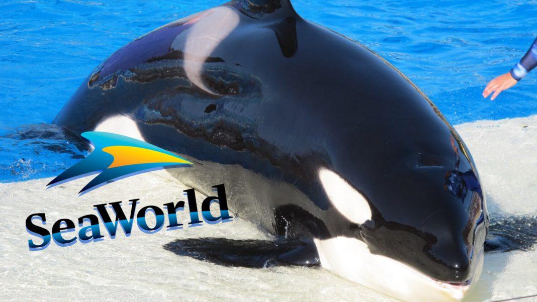 SeaWorld Serves Vegan Food At Its Whale Jail
