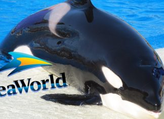 SeaWorld Serves Vegan Food At Its Whale Jail