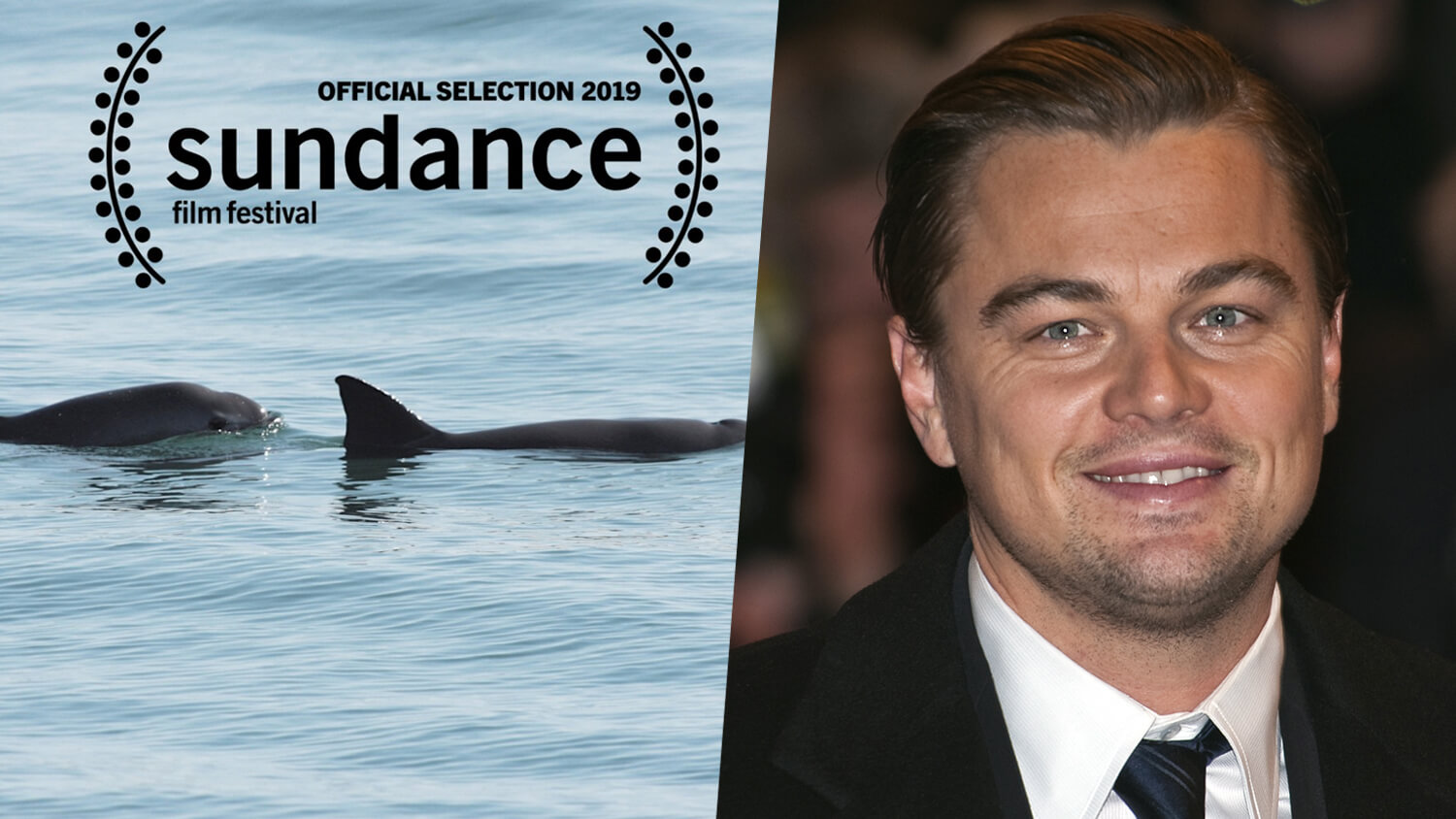 Leonardo DiCaprio Documentary on Vaquitas Premiers at Sundance