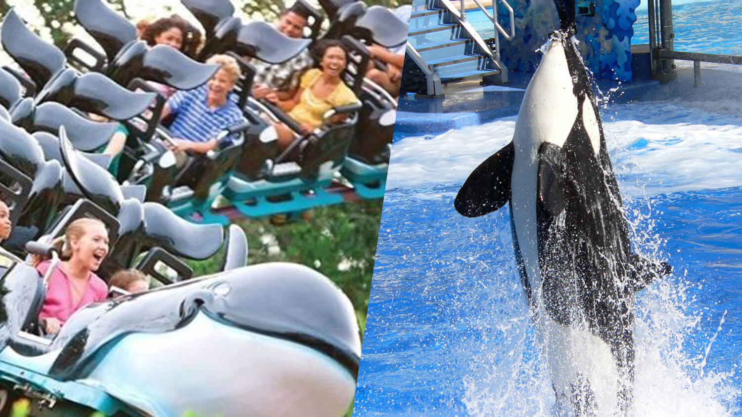 SeaWorld's Shamu Express Orca-Themed Rollercoaster Ride Shuts Down