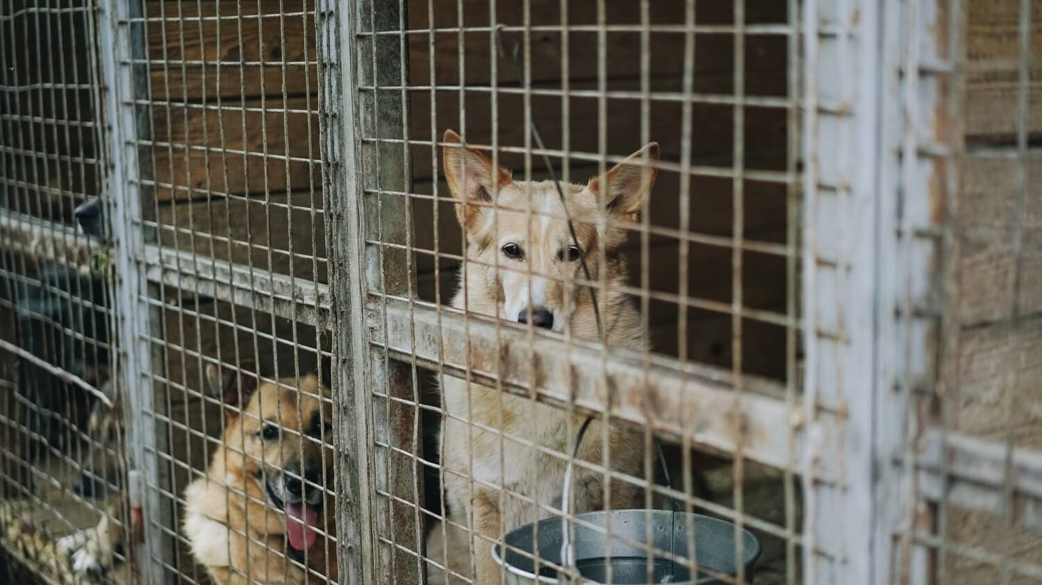 Pet Detectives Use Counterterrorism Technology to Take Down Puppy Mills