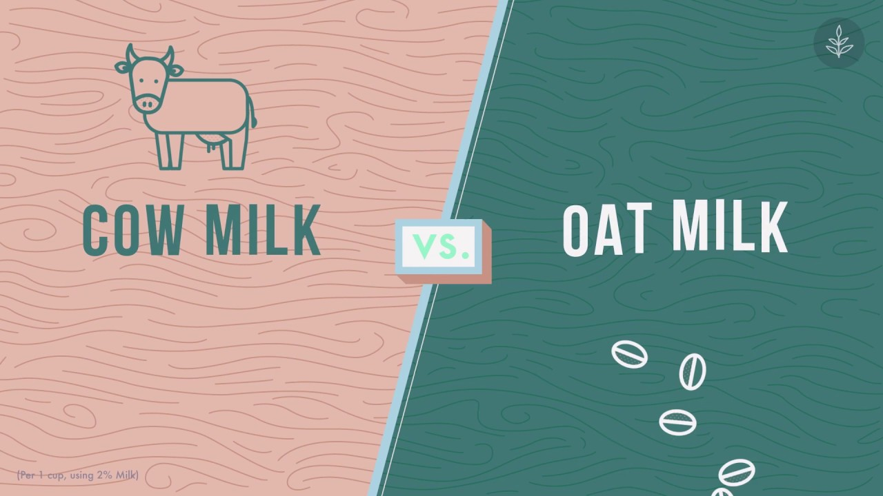 Cow's Milk VS Oat Milk - Is Milk Bad For You? - Weighing Up The Benefits of Dairy and Vegan Milk