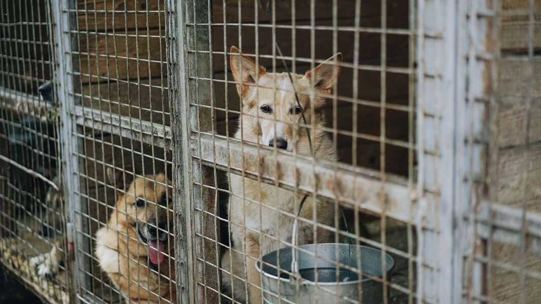 Seoul Mayor to Ban the Dog Meat Trade