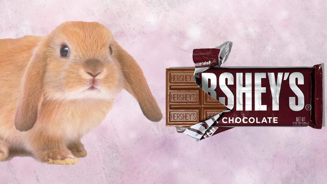 No More Animal Testing for Hershey Chocolates