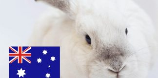 Animal Testing for Cosmetics Banned in Australia