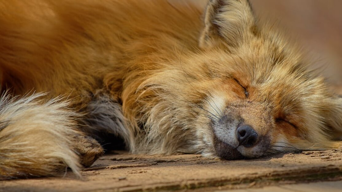 Fur Farming May Soon Be Illegal in Ukraine
