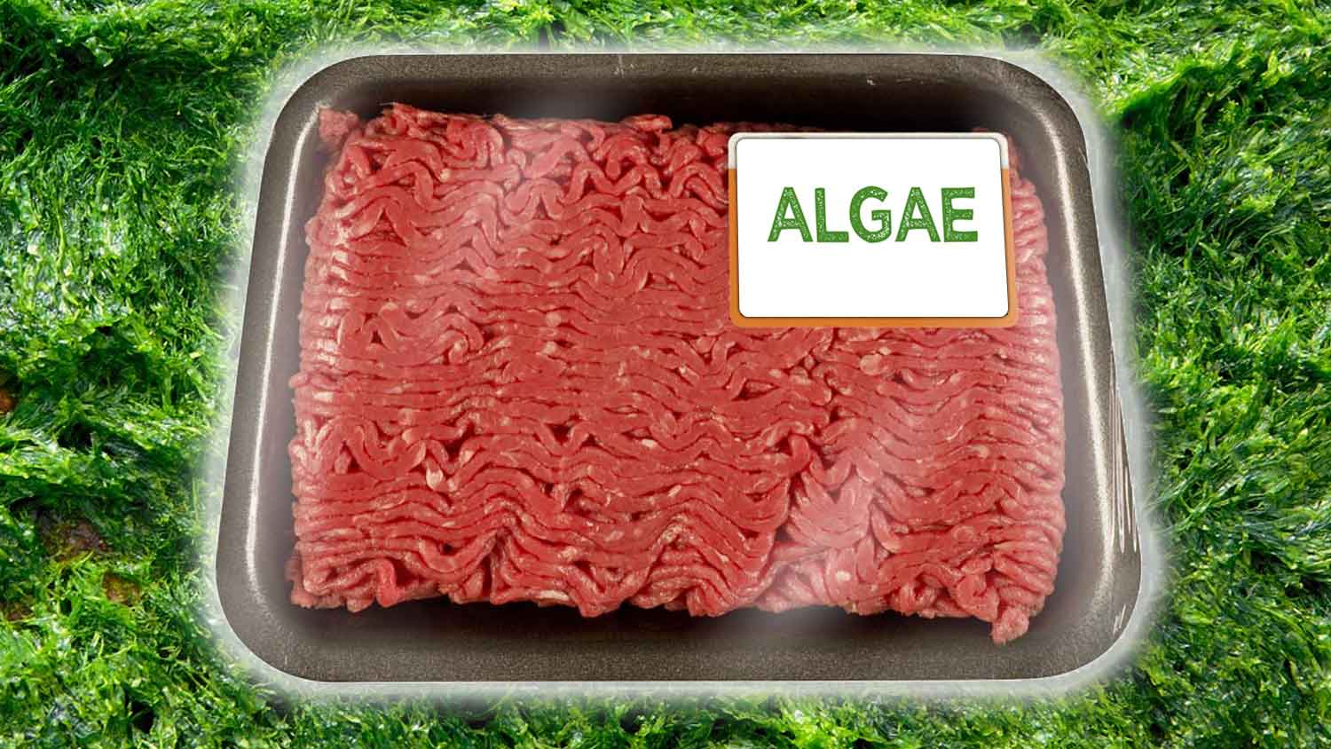 The Food of the Future Will All Be Made From Algae