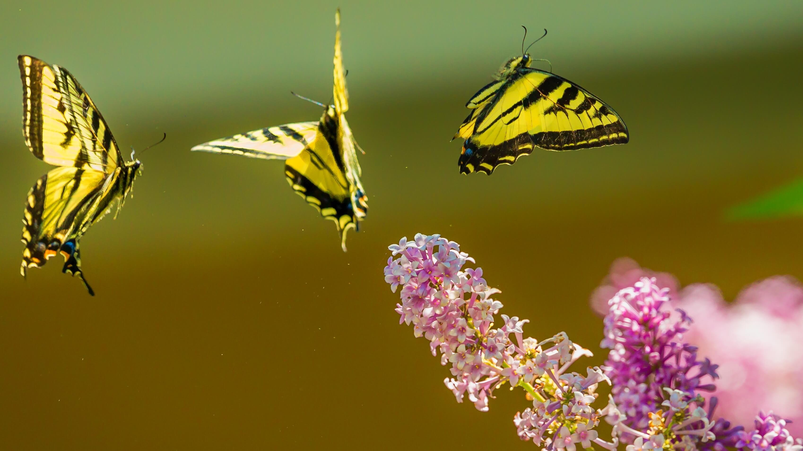 California Becomes Drought-Free, Attracts One Billion Butterflies
