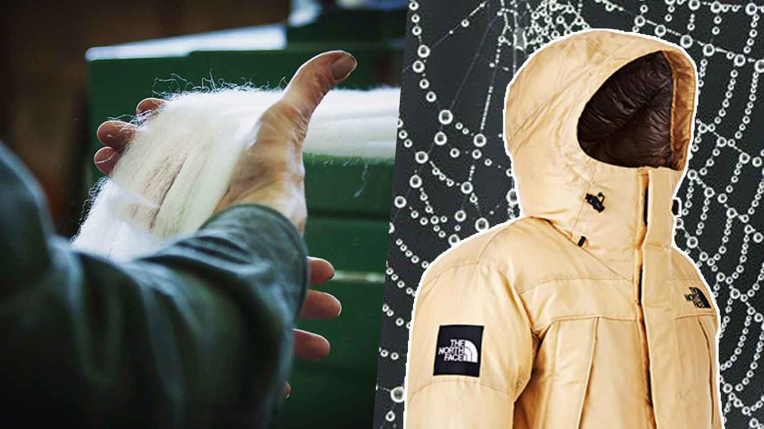 Patagonia and North Face Jackets Made With Vegan Spider Silk