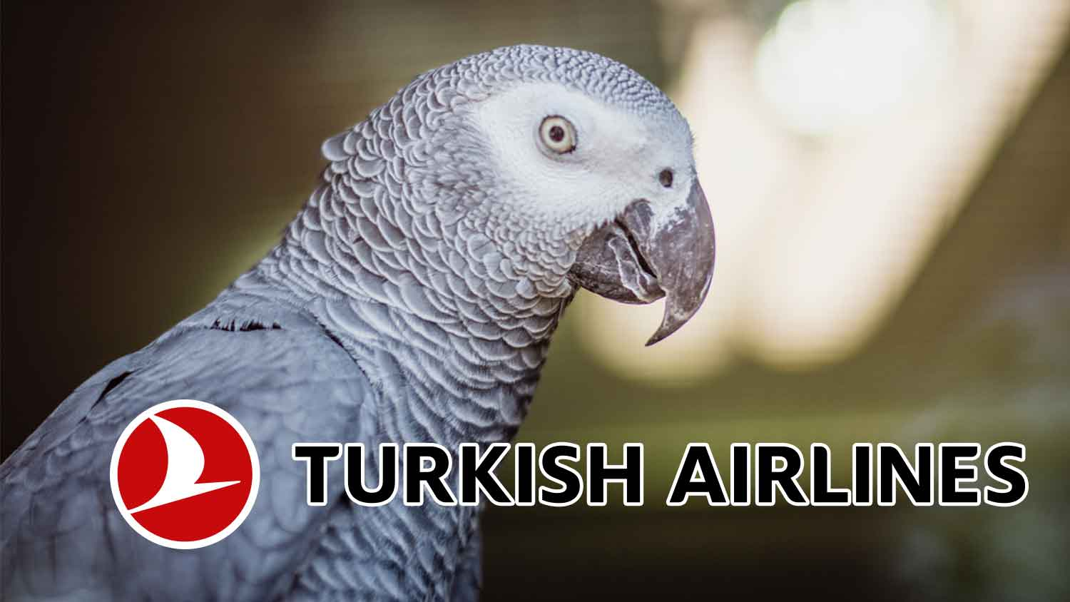 Turkish Airlines Is Now Fighting Illegal Animal Traffickers