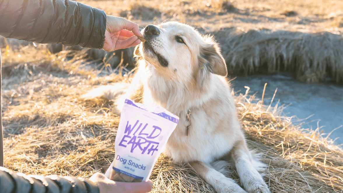 5 Vegan Dog Food Brands to Keep Your Hound Healthy and Happy