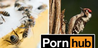 Watch More Pornhub to Save the Planet