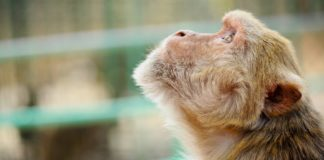 99.5% of Brits Want a Worldwide Ban on Animal Testing