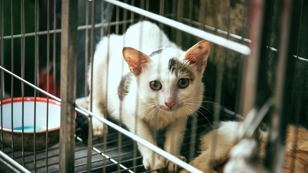 Why Switzerland May Soon Ban Animal Testing