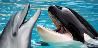 Canada Is About to Ban Dolphin and Whale Captivity