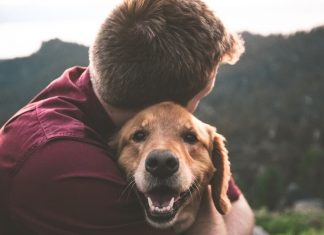 This Company Makes Vegan CBD for Traumatized Pets