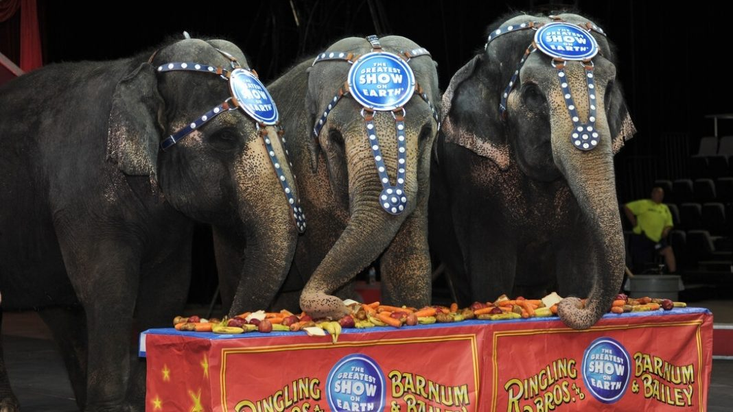 Wild Animal Circuses Are Now Banned In Madrid