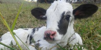 Nearly 3,000 Dairy Farms Closed in the U.S. in 2018