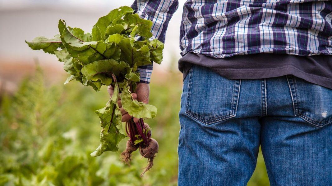 Dairy Farmer Says Industry Must Adapt to Vegan Demand