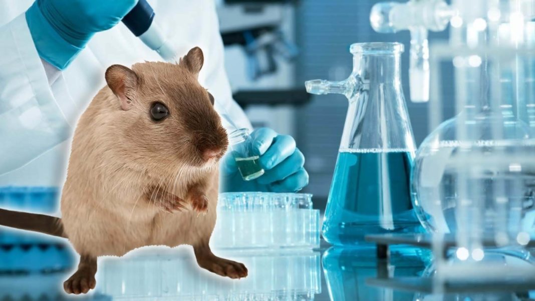Why Big Pharma Forces Rats and Mice to Swim for Their Lives