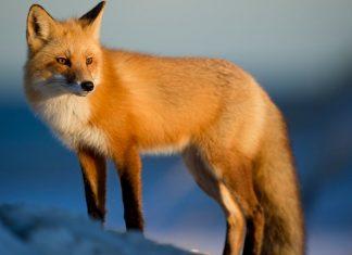 Germany Just Shut Down Its Last Fur Farm